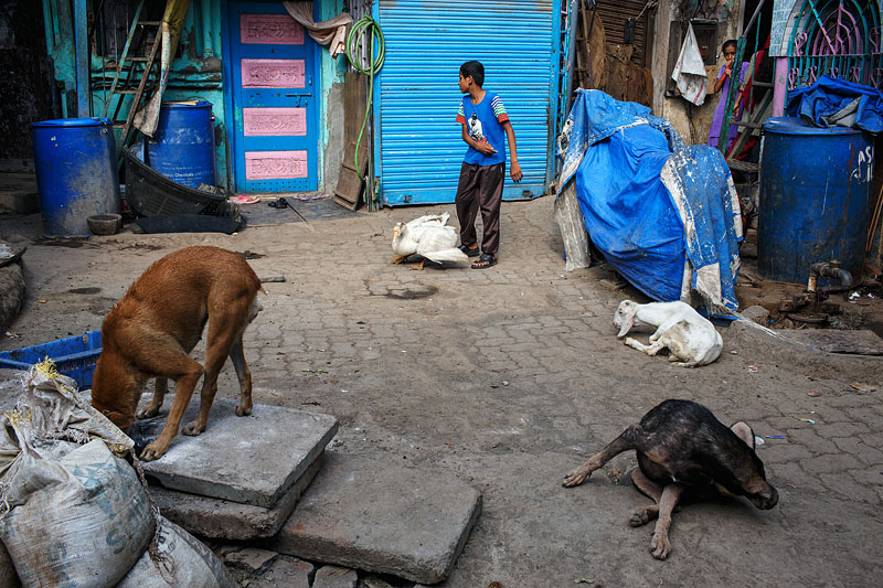 india_mumbai_andheri_slum_people_animals